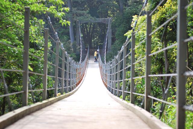 伊豆 伊豆高原 観光 橋立釣り橋